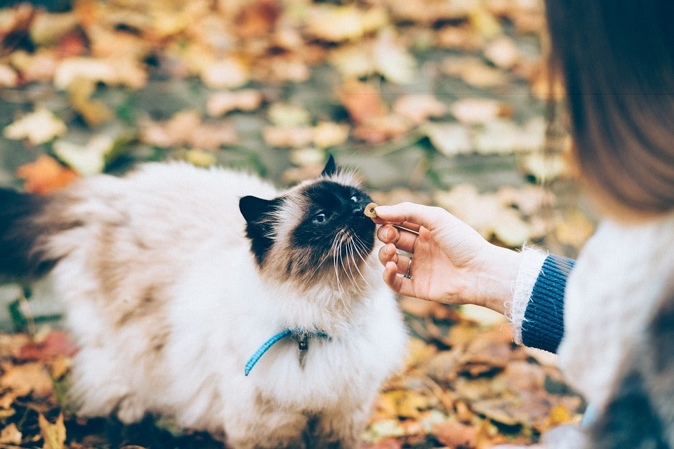woman giving cat a treat