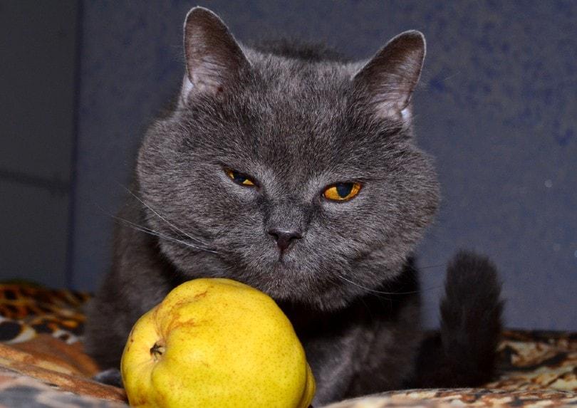 A cat sits near a ripe yellow pear