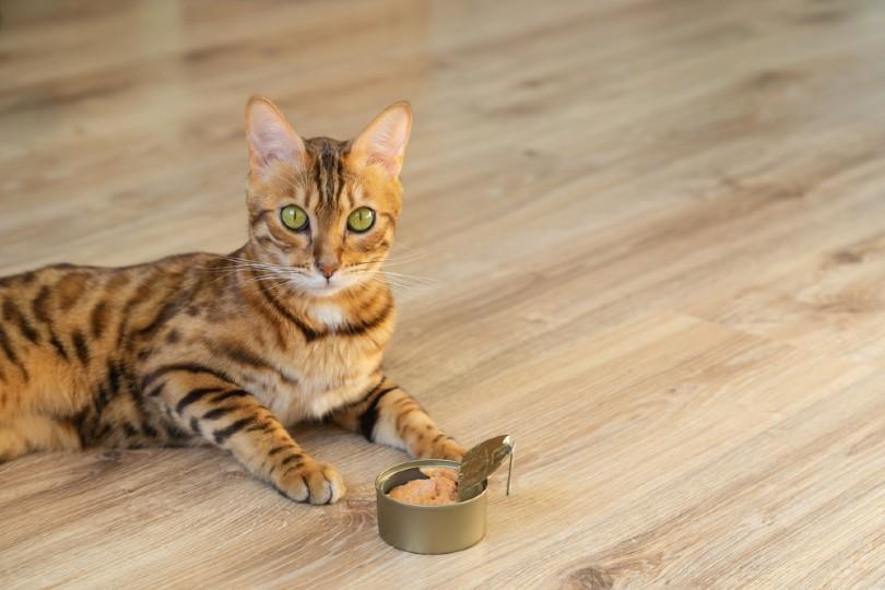 Cat and wet cat food