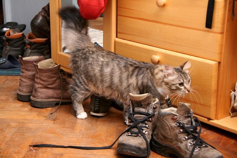 cat_PHOTOGRAPHY, Shutterstock