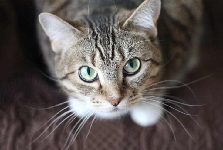 Tabby looking up