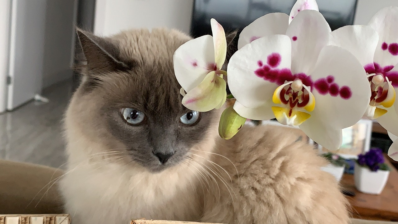 cat and orchid