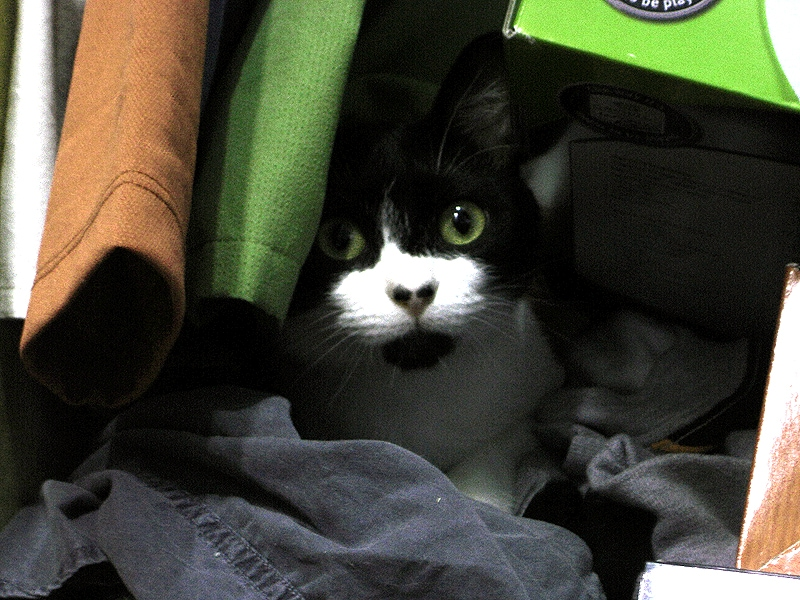 cat hiding in clothes