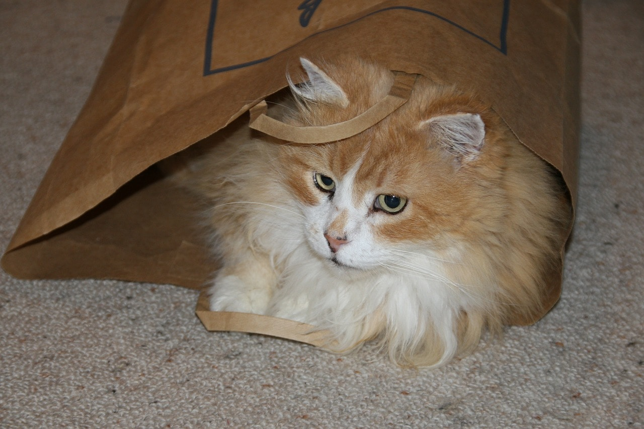 cat inside a paper bag