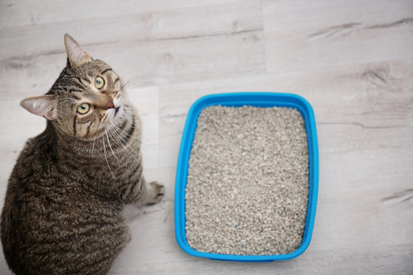 cat near litter tray indoors