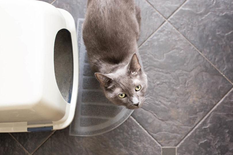cat outside the litter box