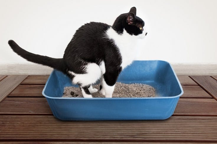 cat pooping in the litter