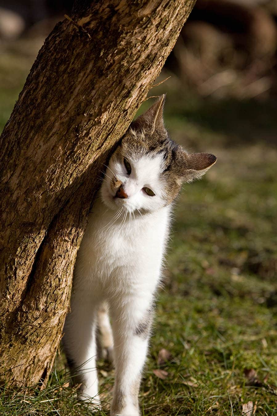 cat rubbing up against the tree