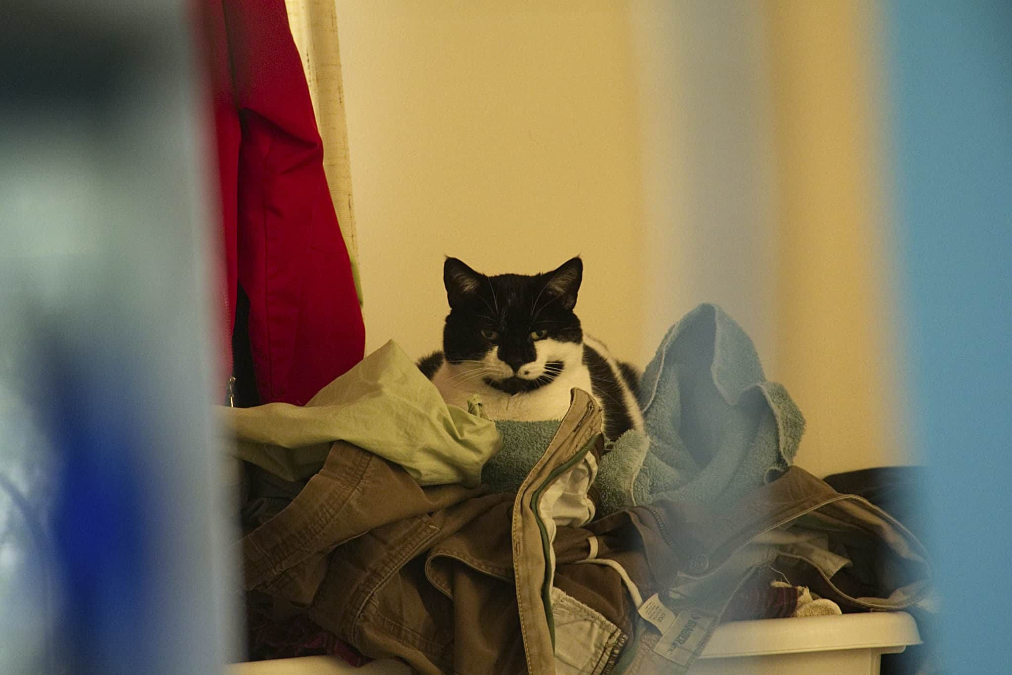 cat sitting on top of laundry pile