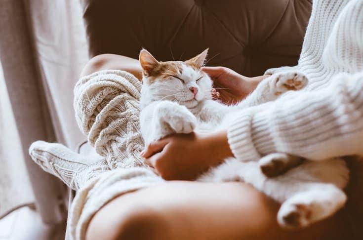 cat sleeping on a woman's lap_Shutterstock_Alena Ozerova