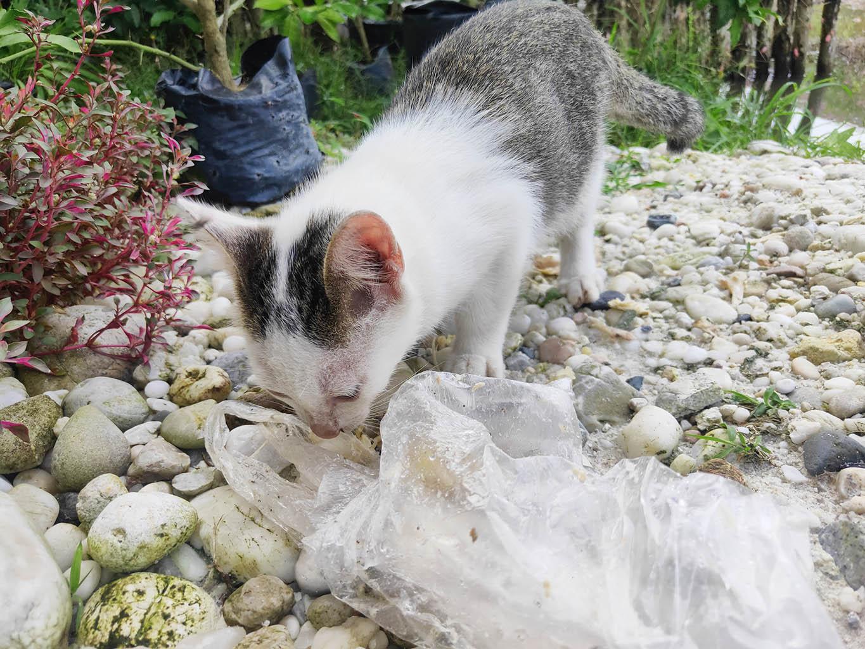 cat smelling plastic