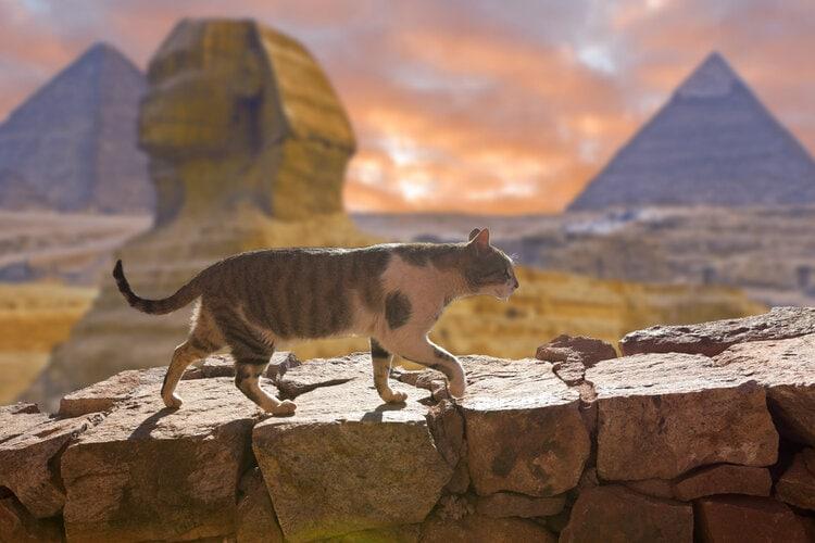 cat walking in egypt