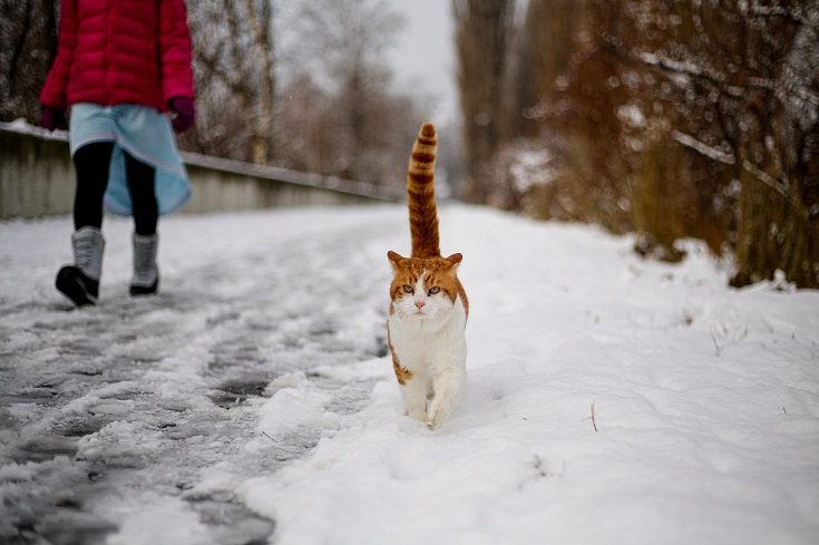 cat walking with a girl