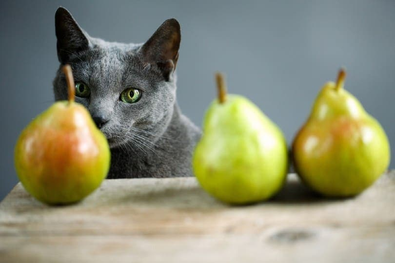 curious cat inspecting fresh ripe pears