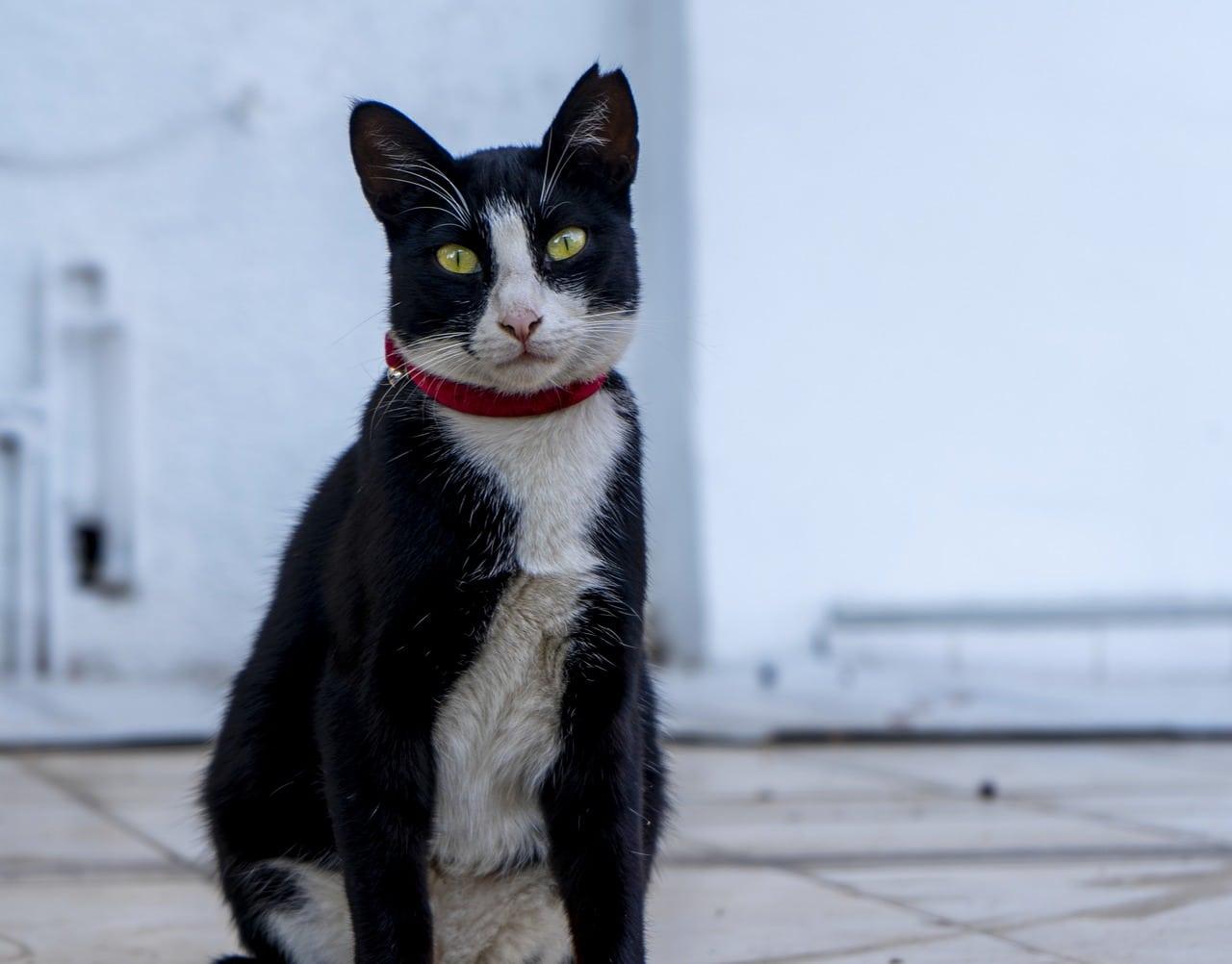 dirty black cat
