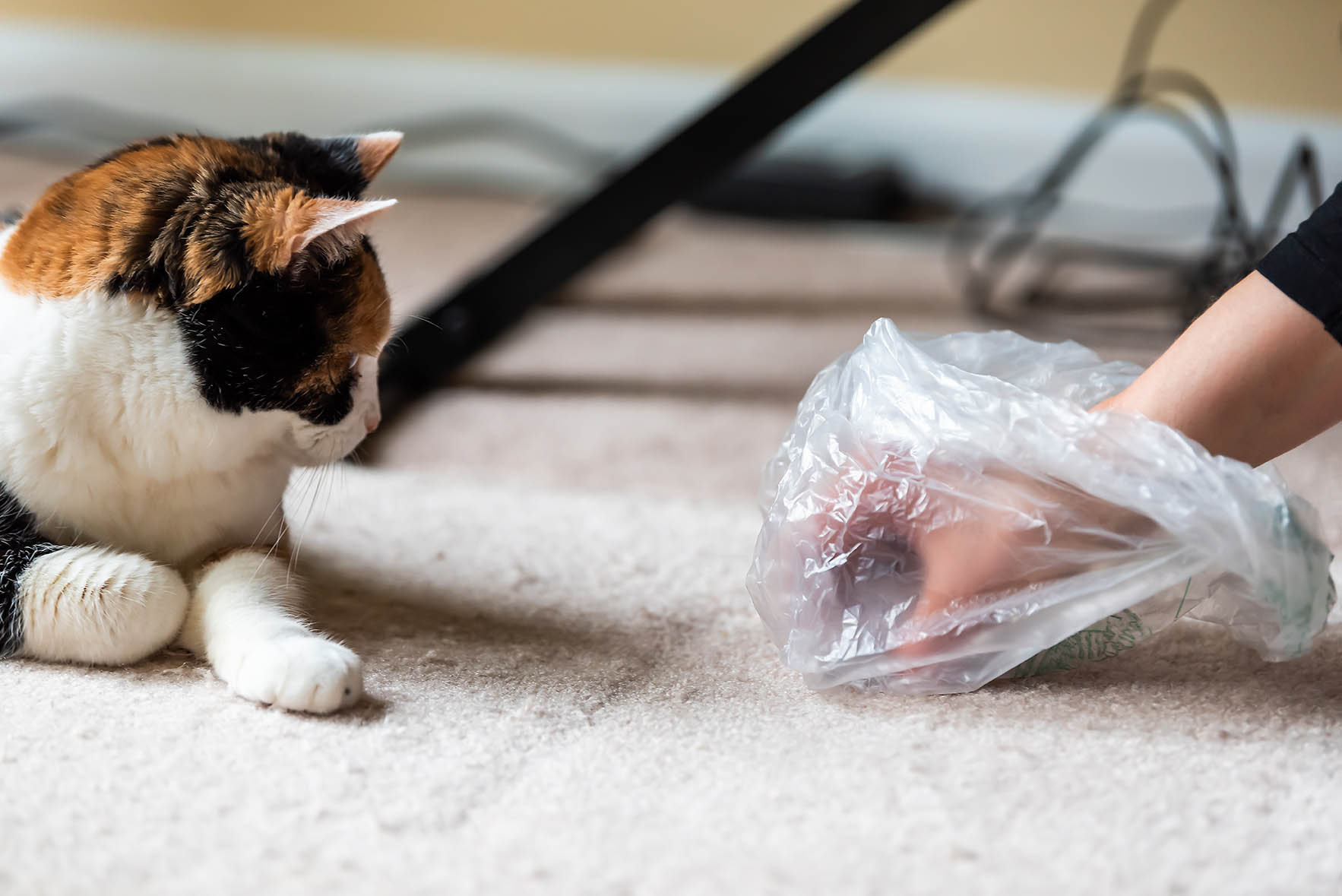 hand picking up cat poop