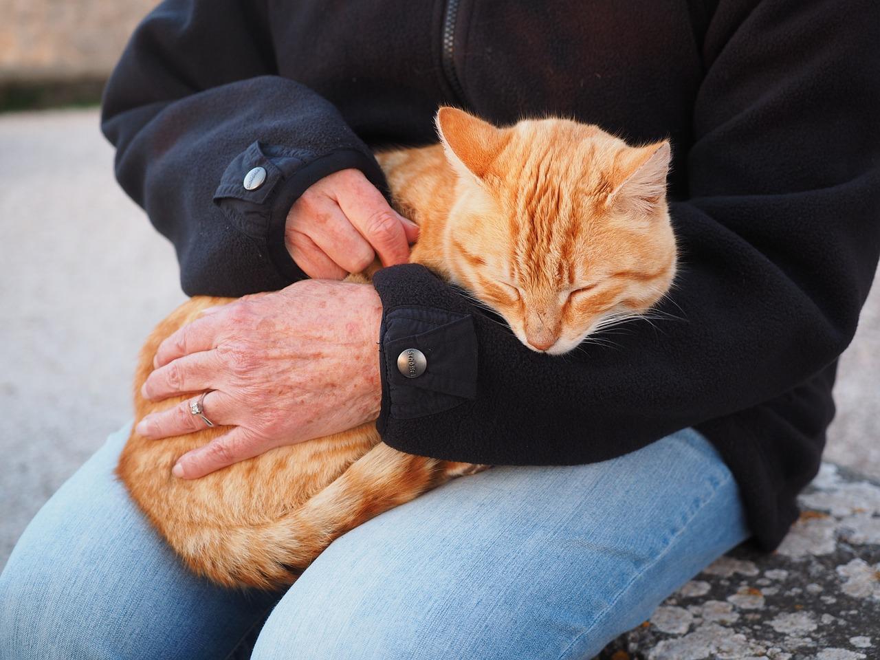 person brushing cat's fur