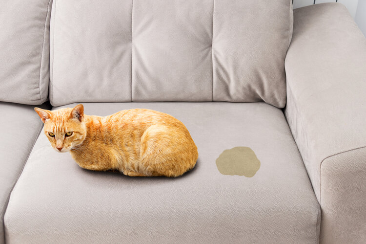 Your Cat Is Ing On The Couch