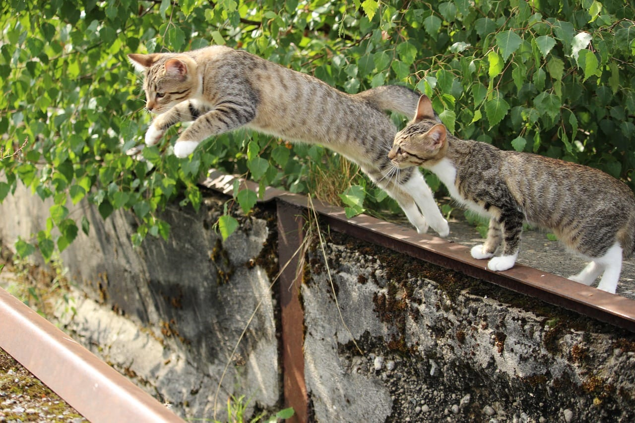 two cats jump