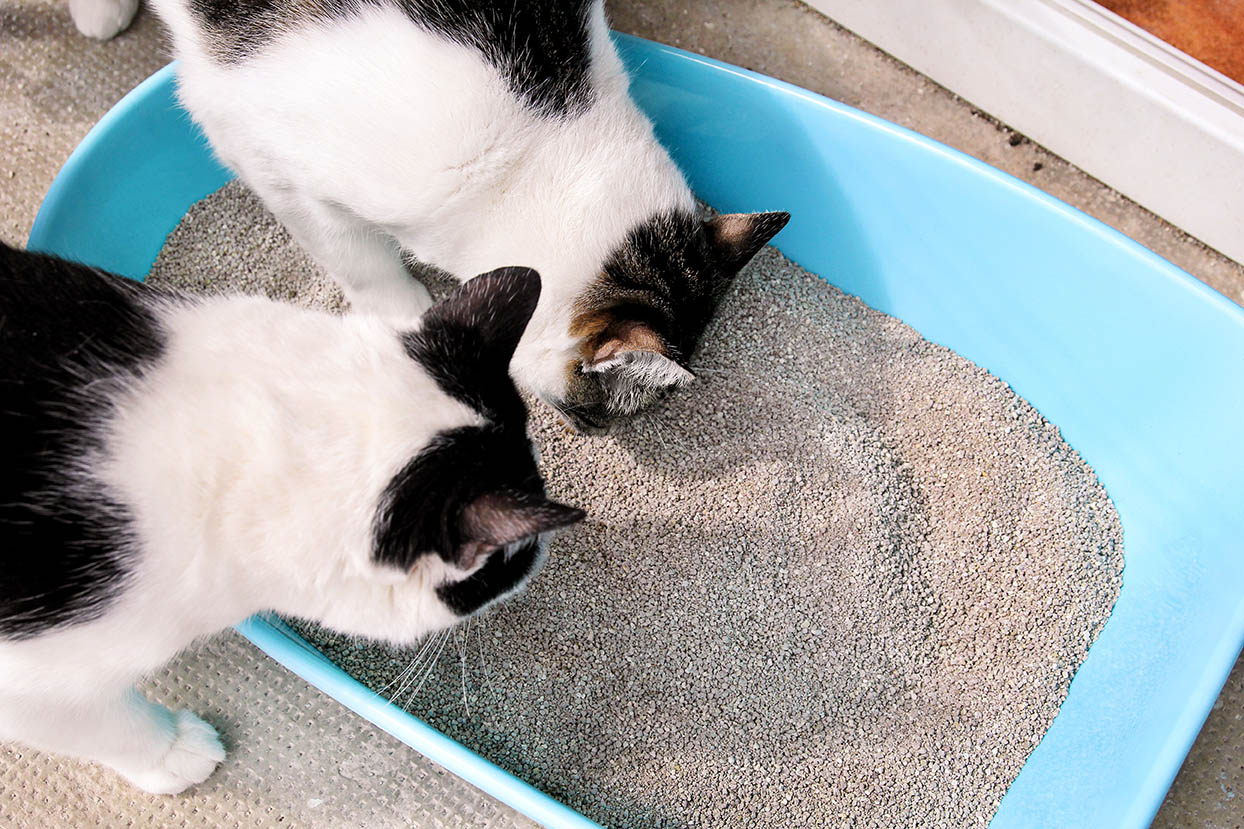 two cats looking at the litter box