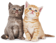 Two small cats looking up