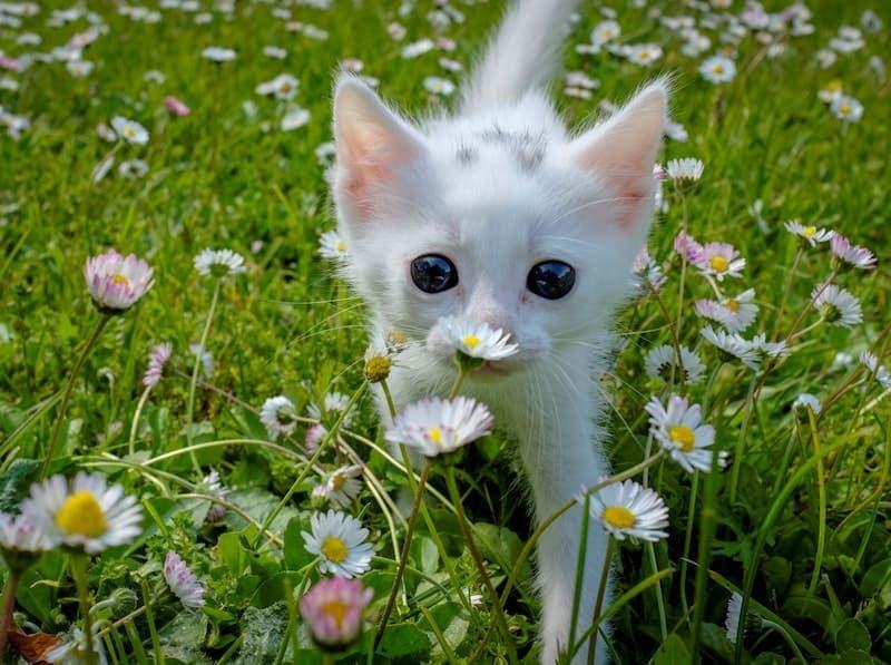 wholesome cute kitten flowers