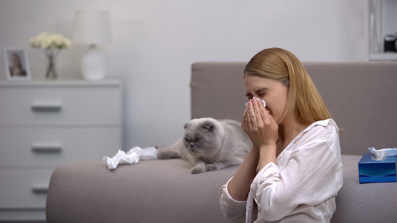 Woman sneezing beside a cat