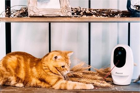 Pawbo Life Pet Camera