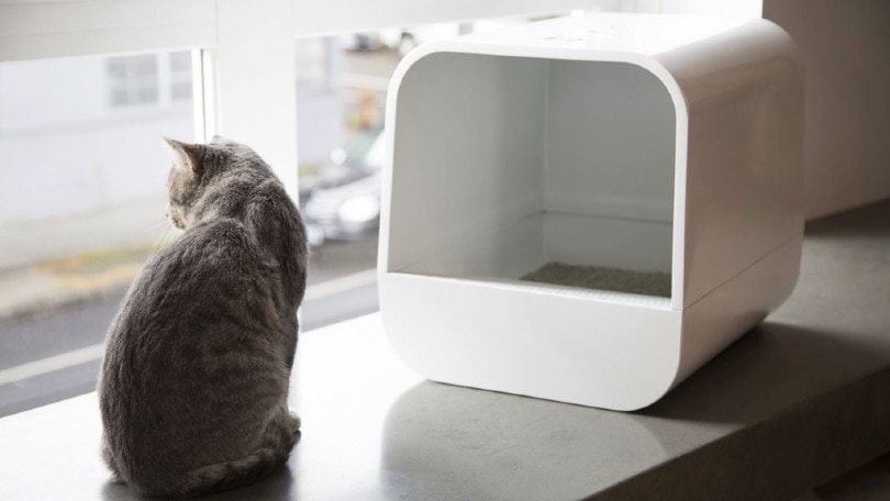 a cat and an automatic self cleaning cat litter box