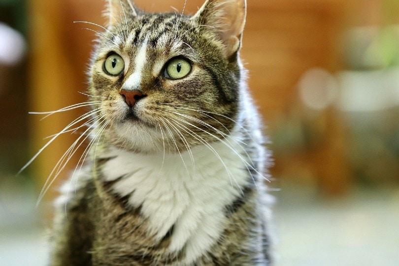 cat eyes_Annette Meyer, Pixabay