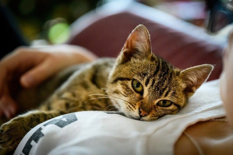 a tabby cat lying on a woman's chest