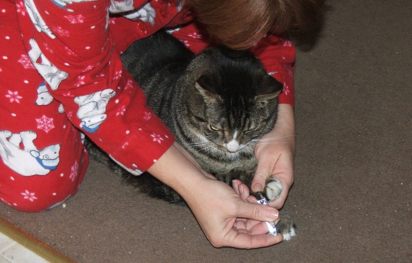 a woman clipping cat's nails