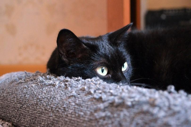 black cat and furniture scratch protector
