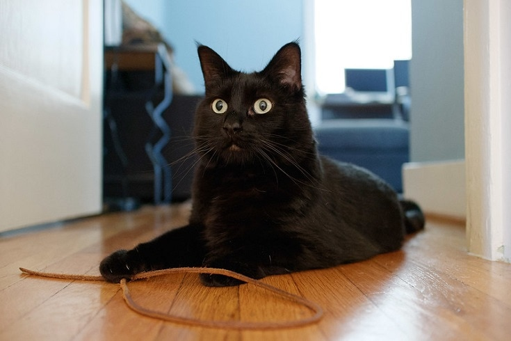 black cat with strings