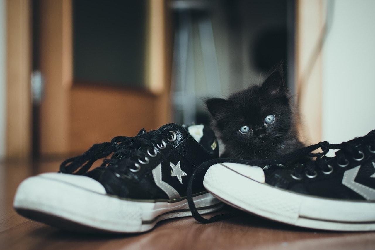 black kitten beside the shoes