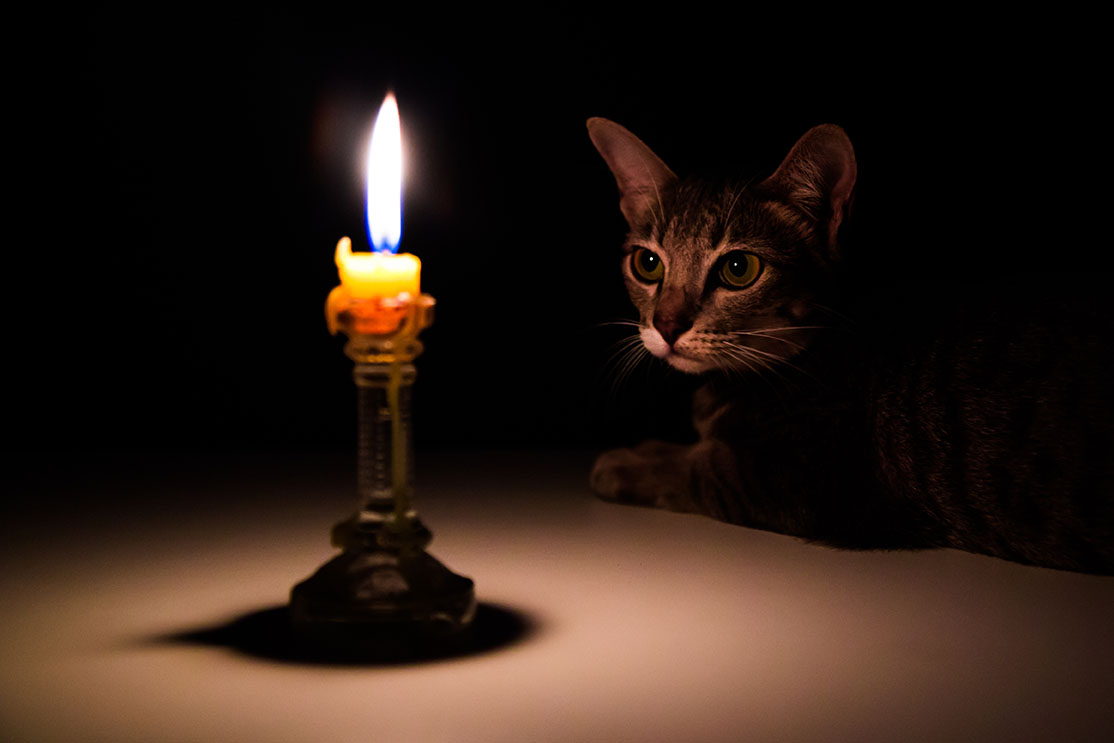 candle and cat