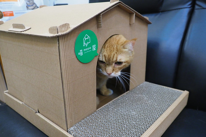21 Diy Cardboard Cat Houses You Can Build Today With Pictures Excited Cats