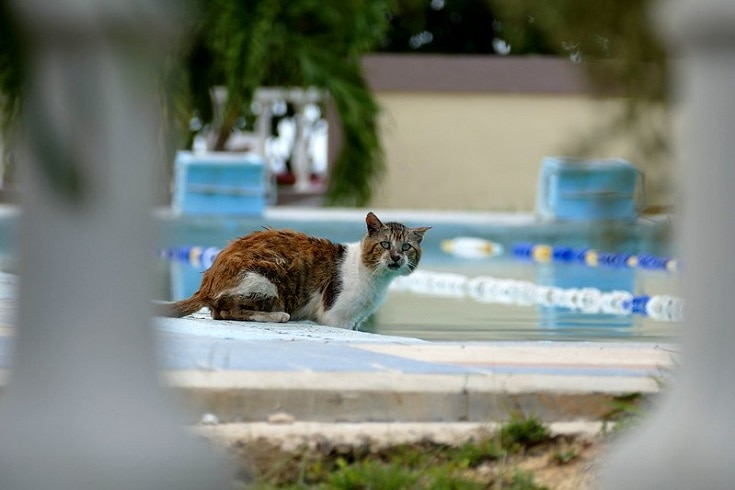 cat about to go to the pool