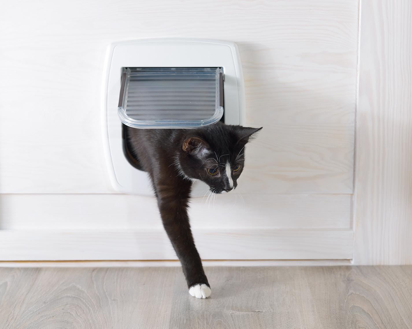 cat entering through cat door