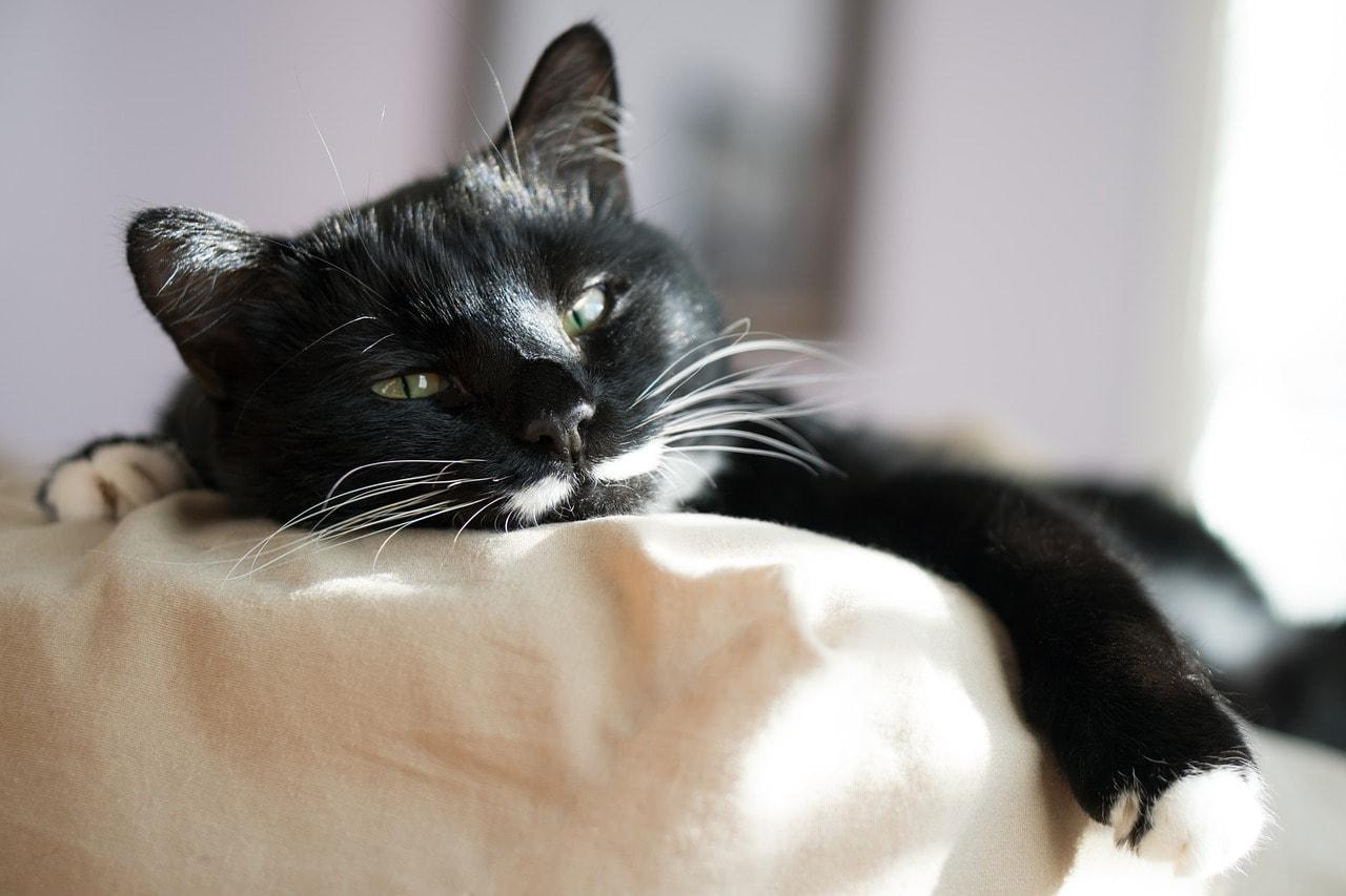 cat feeling cozy