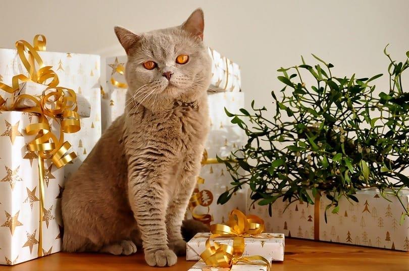 cat gift-pixabay