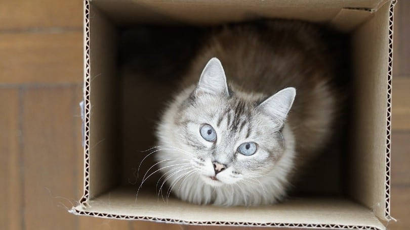 cat in a box looking up