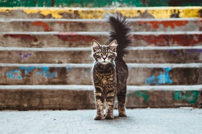 cat in defense mode