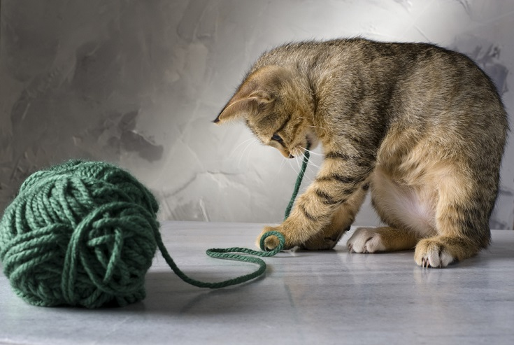 cat playing with strings_Shutterstock_Noam Armonn