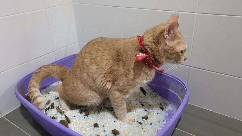 cat poop in litterbox_RJ22, Shutterstock