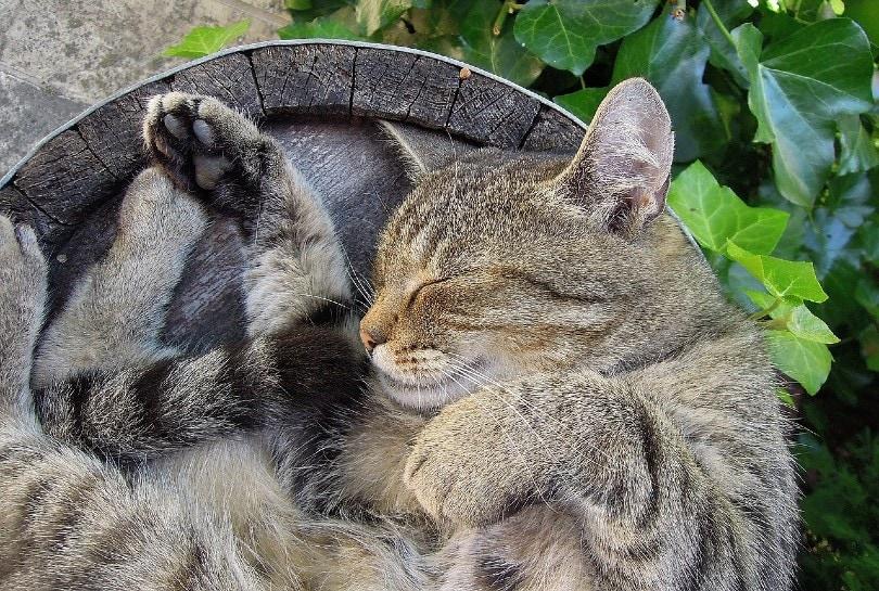 cat sleeping on a tree trunk