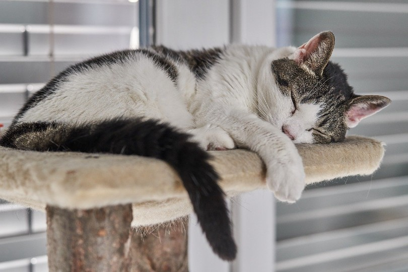 cat sleeping on its condo