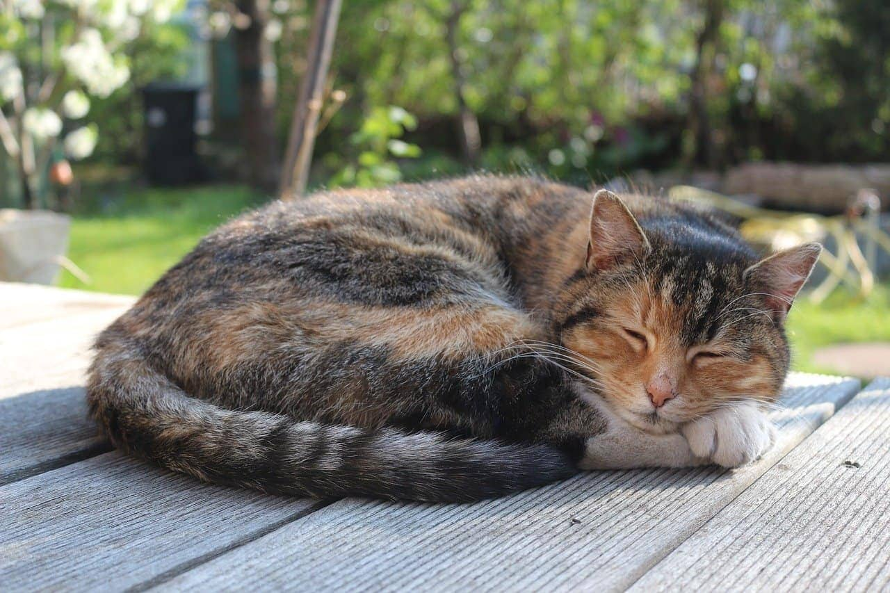 cat sleeping on the patio