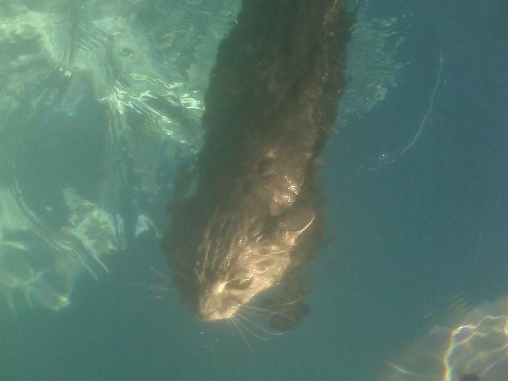 cat under water