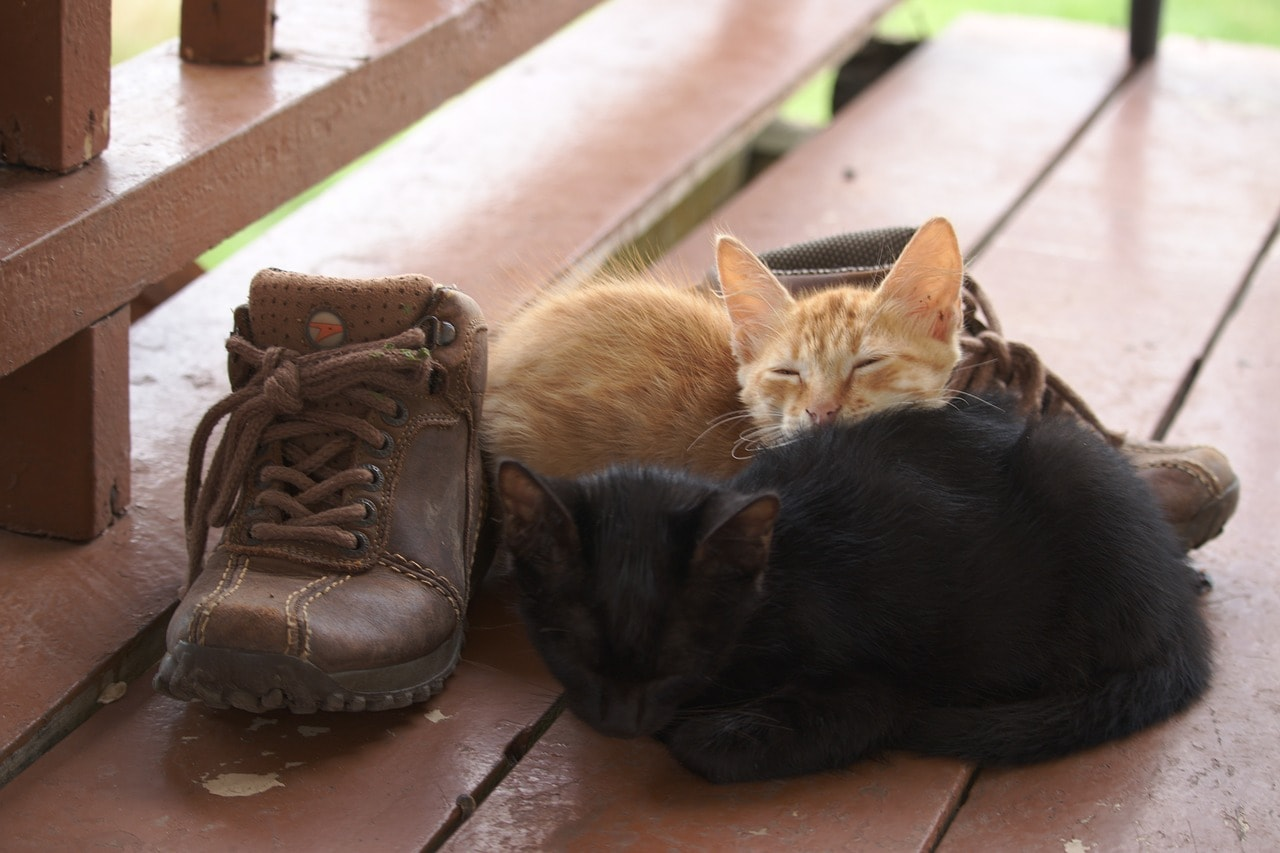 cats sleeping beside the shoes